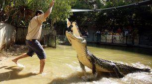 Feed the Crocodile at Hartleys
